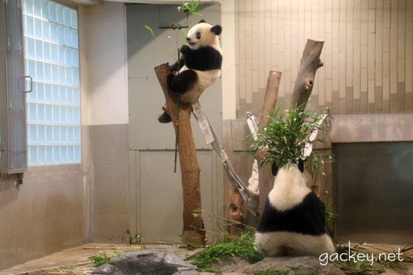 再び、上野動物園へ(シャンシャンに会いに行ってきました。パート2)
