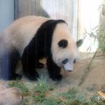 ガッキーが、上野動物園デビューしました。