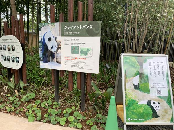 パンダのもりに行ってきました。